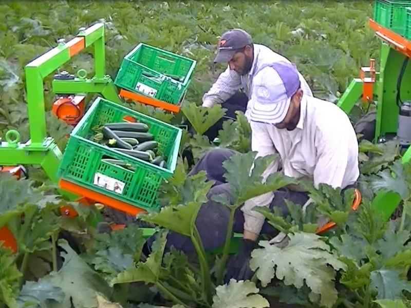 macchina raccolta zucchine, peperoni, pomodori