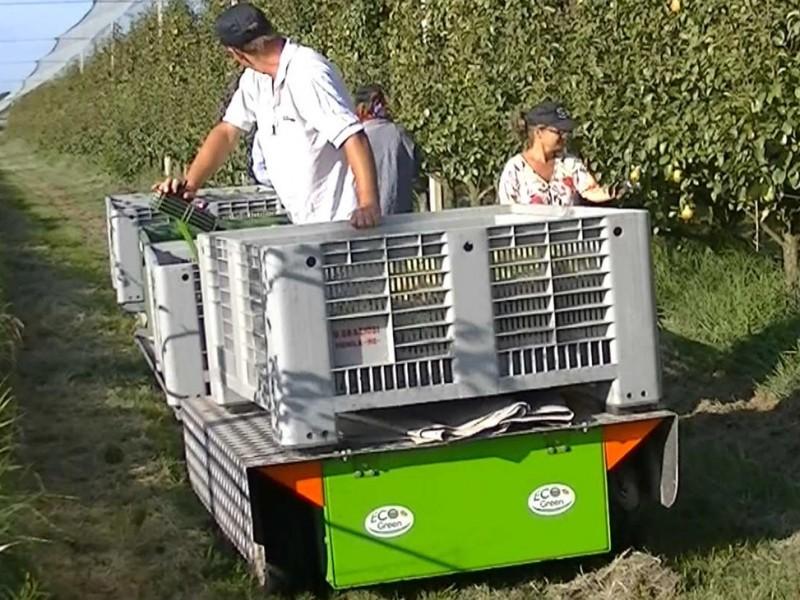 macchina raccolta mele, pere, pesche, arance, kiwi